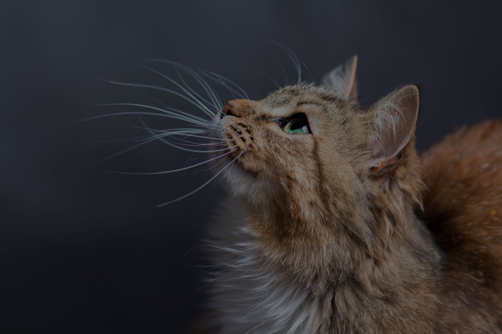 portrait of a beautiful cat