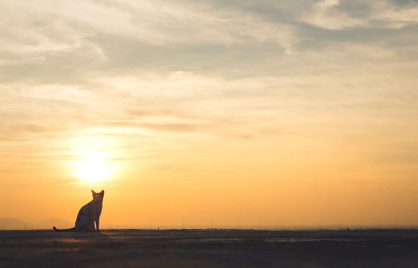 Cute cat on the roof,sunset background,cat looking - Image