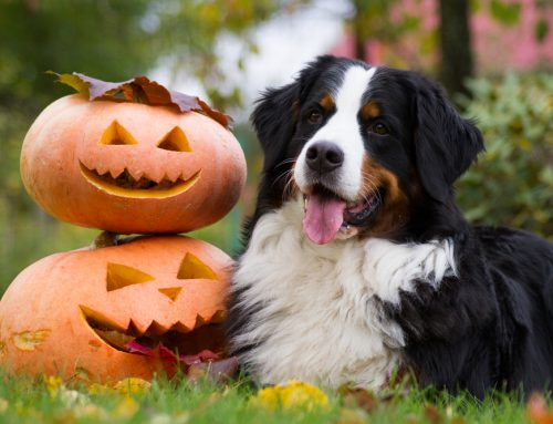 Lessons from Howl-O-Ween Safety School for Pets