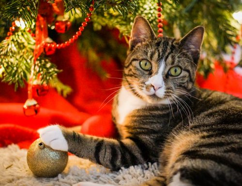 13 Unlucky Holiday Hazards that Every Pet Owner Needs to Know