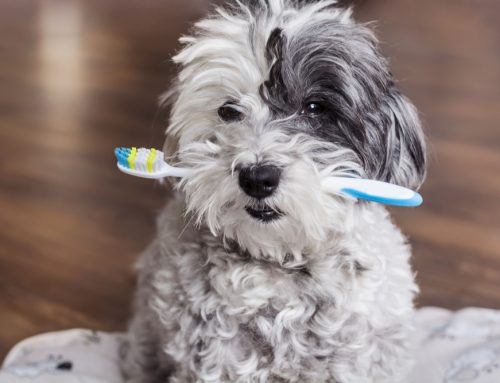 5 Tips to Boost Your Pet's Dental Health