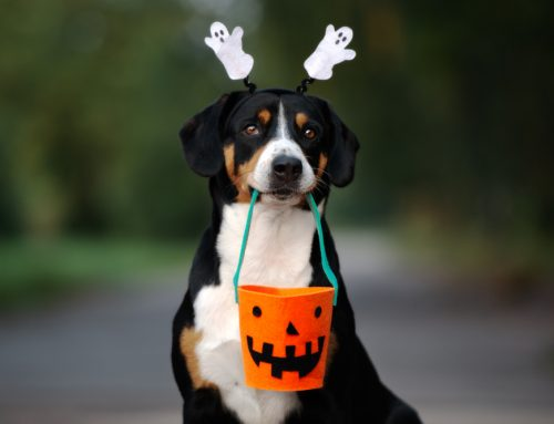 5 Ways to Help Your Pet Have a Howling Good Howl-o-Ween