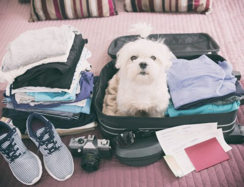 5 Tips for Safe Travels With Your Pet